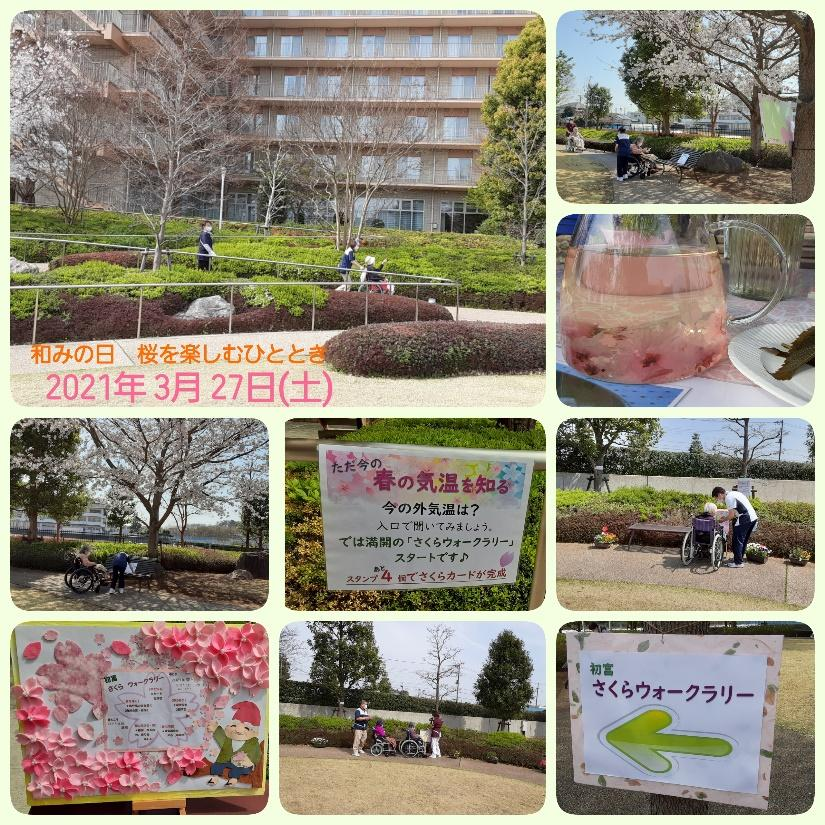 桜WR-2.jpg