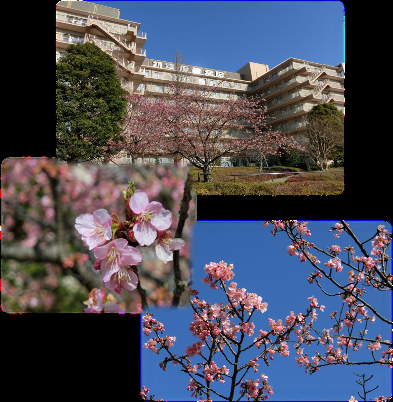 庭園vol.1<河津桜>.png